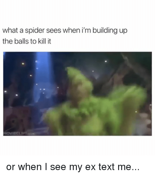 Funny, Memes, and Spider: what a spider sees when i'm building up  the balls to kill it or when I see my ex text me...