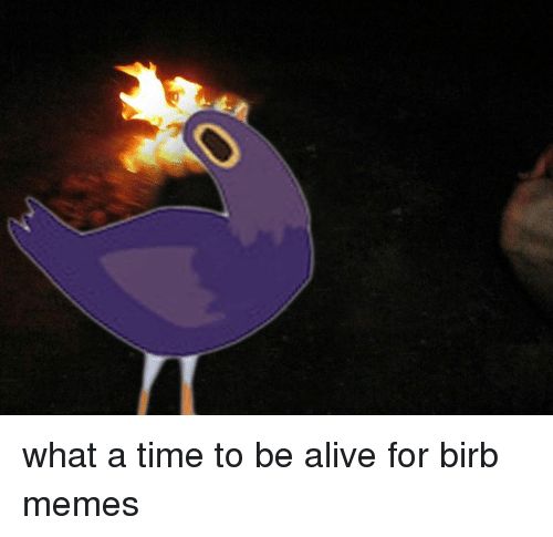 what a time to be alive for birb memes 14274050 what a time to be alive for birb memes dank meme on me me