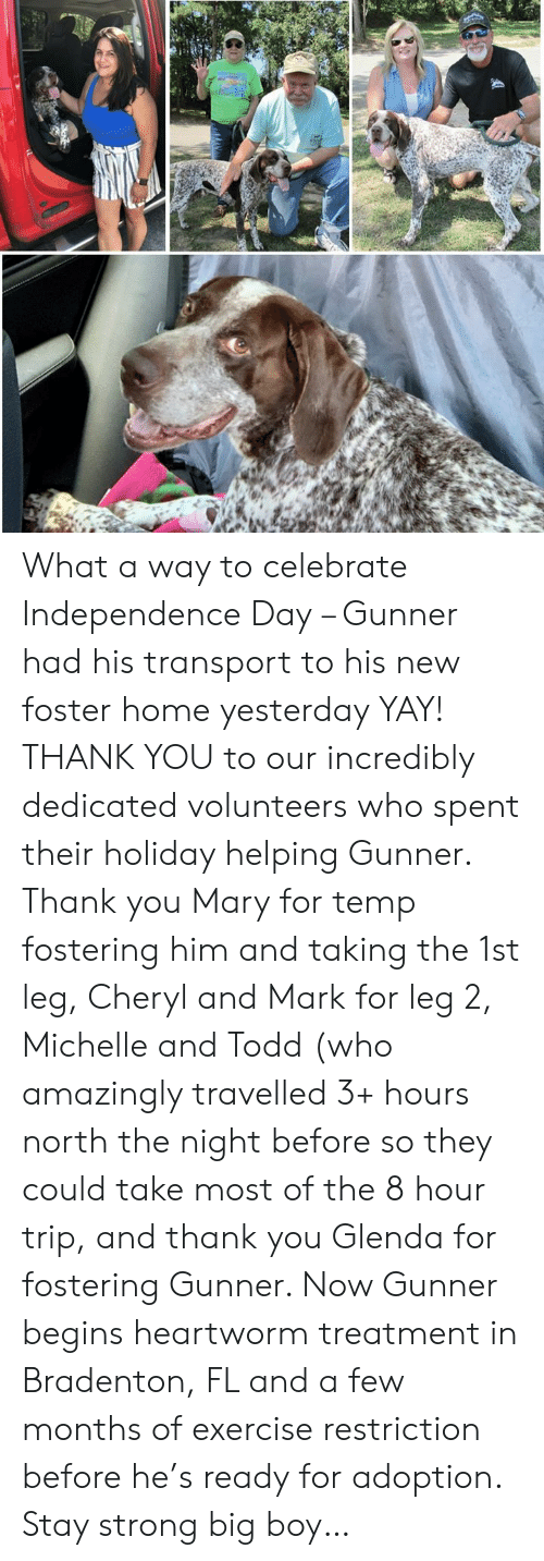 Independence Day, Memes, and Thank You: What a way to celebrate Independence Day – Gunner had his transport to his new foster home yesterday YAY!  THANK YOU to our incredibly dedicated volunteers who spent their holiday helping Gunner.  Thank you Mary for temp fostering him and taking the 1st leg, Cheryl and Mark for leg 2, Michelle and Todd (who amazingly travelled 3+ hours north the night before so they could take most of the 8 hour trip, and thank you Glenda for fostering Gunner.  Now Gunner begins heartworm treatment in Bradenton, FL and a few months of exercise restriction before he's ready for adoption.  Stay strong big boy…