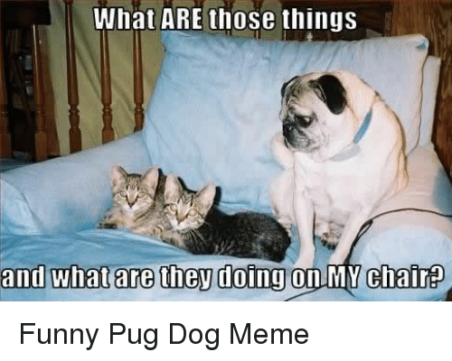Funny, Meme, and What Are Those: What ARE those things  and whatare then doingon MYchair Funny Pug Dog Meme