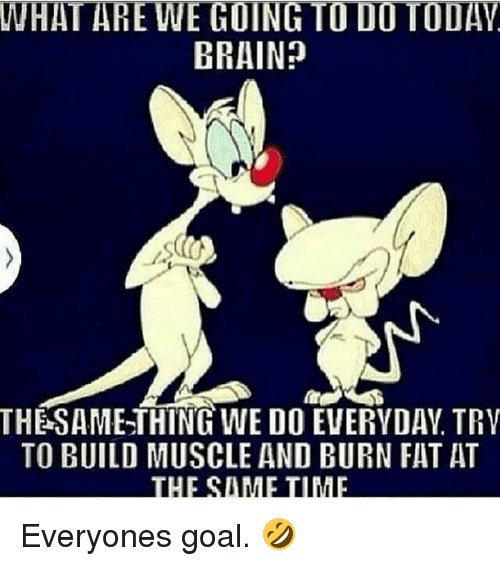 Brain, Goal, and Fat: WHAT ARE WE GOING TO DO TODAV  BRAIN?  THESAMETHINGWE DO EVERYDAY, TRV  TO BUILD MUSCLE AND BURN FAT AT  THIESIMETIME Everyones goal. 🤣