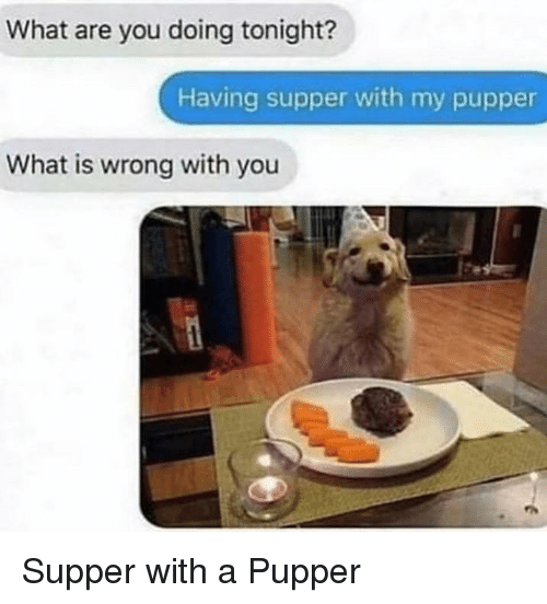 What Is, You, and What: What are you doing tonight?  Having supper with my pupper  What is wrong with you Supper with a Pupper