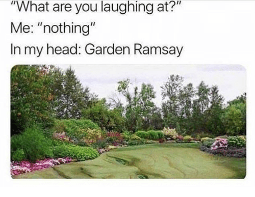 """Head, You, and What: """"What are you laughing at?""""  Me: """"nothing""""  In my head: Garden Ramsay"""