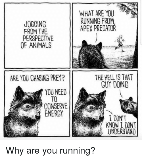 Animals, Energy, and Apex: WHAT ARE YOU  RUNNING FROM  APEX PREDATOR  JOGGING  FROM THE  PERSPECTIVE  OF ANIMALS  THE HELL IS THAT  GUY DOING  ARE YOU CHASING PREY?  YOU NEED  TO  CONSERVE  ENERGY  I DONT  KNOW I DONT  UNDERSTAND Why are you running?