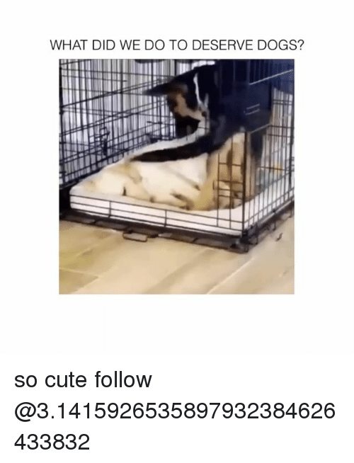 Cute, Dogs, and Memes: WHAT DID WE DO TO DESERVE DOGS? so cute follow @3.1415926535897932384626433832