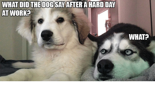 what didthe dog say after a hard day at work 13874666 what didthe dog say after a hard day at work? what? hard day