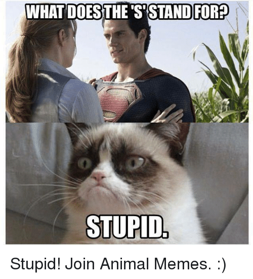 what do the s stand for stupid stupid join animal 16563277 what do the s stand for? stupid stupid! join animal memes grumpy