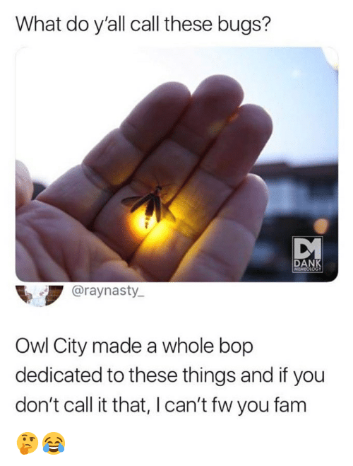 Dank, Fam, and Memes: What do y'all call these bugs?  DANK  MEMEO  Graynasty  Owl City made a whole bop  dedicated to these things and if you  don't call it that, I can't fw you fam 🤔😂