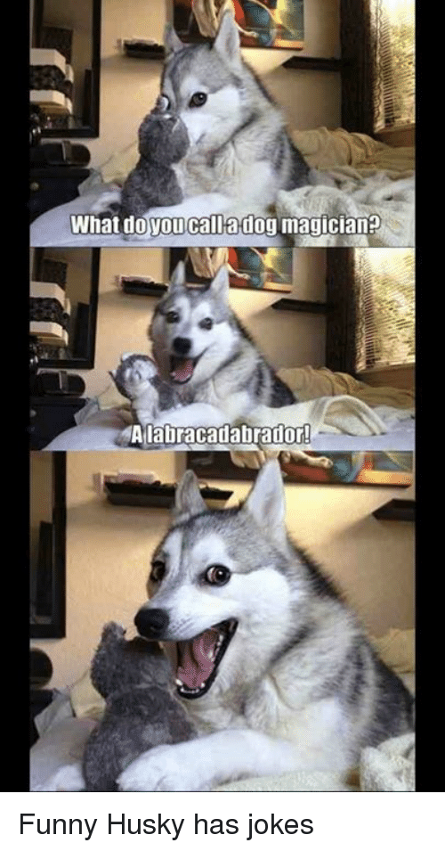 what do you call a dog magician