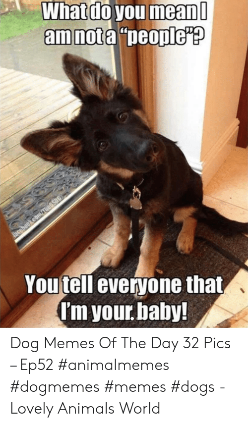 """Animals, Dogs, and Facebook: What do you mean  amnota """"people'?  facebook.comauARsoc  Youtell everyone that,  I'm your baby! Dog Memes Of The Day 32 Pics – Ep52 #animalmemes #dogmemes #memes #dogs - Lovely Animals World"""