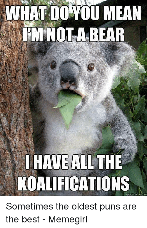 WHAT DO YOU MEAN IM NOT a BEAR I HAVE ALL THE KOALIFICATIONS