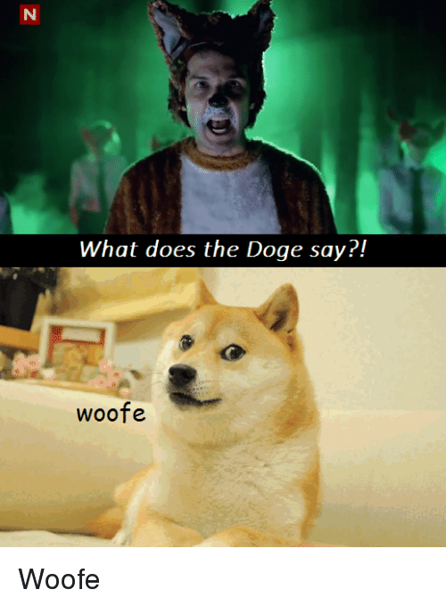 25 best memes about the doge the doge memes doge memes and what does what does the doge say woofe solutioingenieria Choice Image