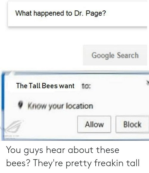 Google, Google Search, and Search: What happened to Dr. Page?  Google Search  The Tall Bees want  to:  Know your location  Allow  Block You guys hear about these bees? They're pretty freakin tall