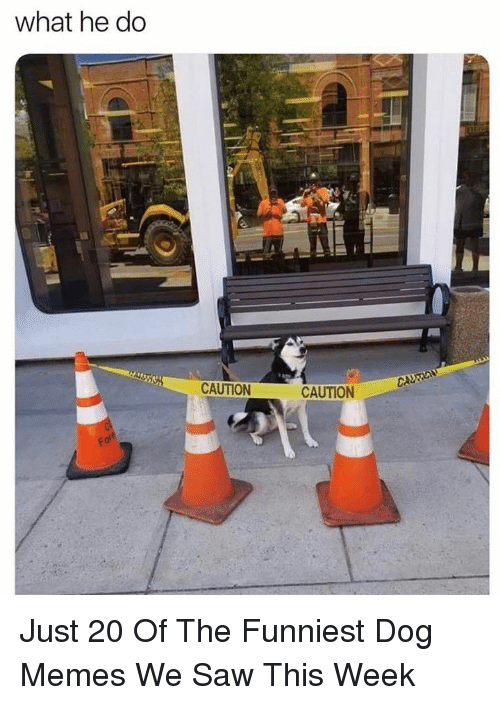 Memes, Saw, and Dog: what he do  CAUTION  CAUTION Just 20 Of The Funniest Dog Memes We Saw This Week