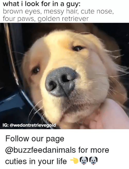 Cute, Life, and Golden Retriever: what i look for in a guy:  brown eyes, messy hair, cute nose,  four paws, golden retriever  IG: @wedontretrievegold Follow our page @buzzfeedanimals for more cuties in your life 👈🐶🐶