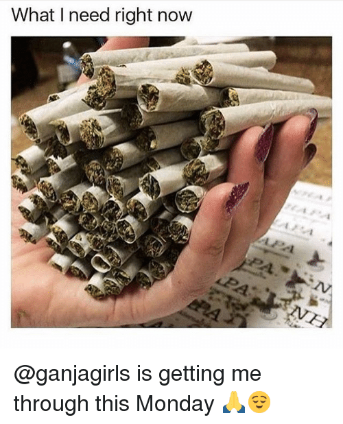 Memes, Monday, and 🤖: What I need right now @ganjagirls is getting me through this Monday 🙏😌