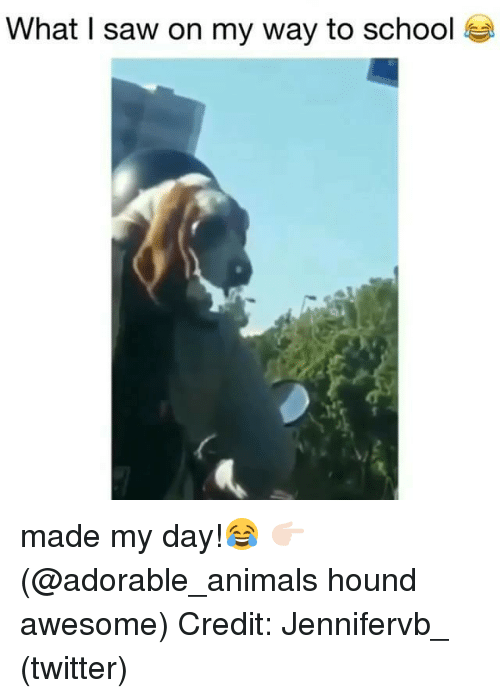 Animals, Memes, and Saw: What I saw on my way to school made my day!😂 👉🏻(@adorable_animals hound awesome) Credit: Jennifervb_ (twitter)