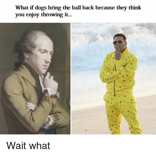 Classical Art and Wait What: What if dogs bring the ball back because they think  you enjoy throwing it. Wait what
