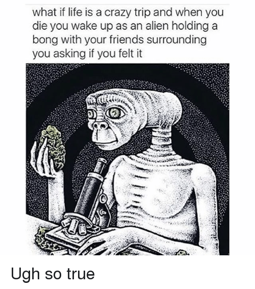 Crazy, Friends, and Life: what if life is a crazy trip and when you  die you wake up as an alien holding a  bong with your friends surrounding  you asking if you felt it Ugh so true