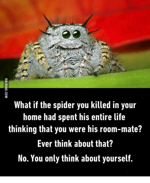 Room Mate, What If, and Room: What if the spider you killed in your  home had spent his entire life  thinking that you were his room-mate?  Ever think about that?  No. You only think about yourself.