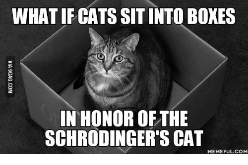 https://pics.me.me/what-ifcats-sitinto-boxes-in-honor-of-the-schrodingers-cat-14029028.png