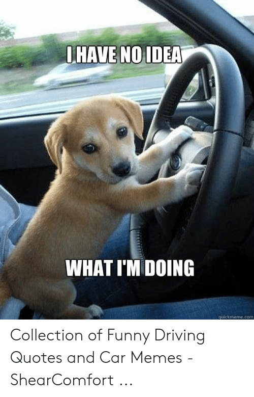 WHAT I\'M DOING Quickmemecom Collection of Funny Driving ...
