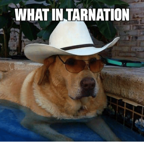 what-in-tarnation-35466903.png