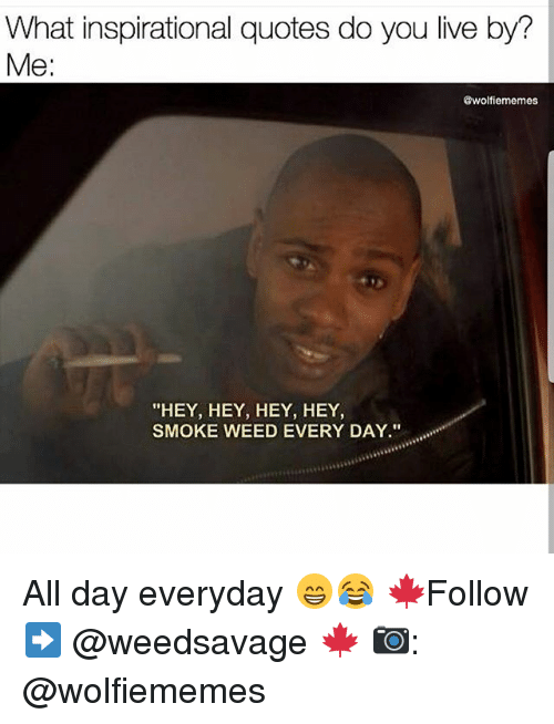 "Memes, Smoke Weed Every Day, and Weed: What inspirational quotes do you live by?  Me:  @wolfiememes  ""HEY, HEY, HEY, HEY,  SMOKE WEED EVERY DAY."" All day everyday 😁😂 🍁Follow ➡ @weedsavage 🍁 📷: @wolfiememes"
