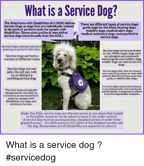 What Is a Service Dog? The Americans With Disabilities Act ADA ...