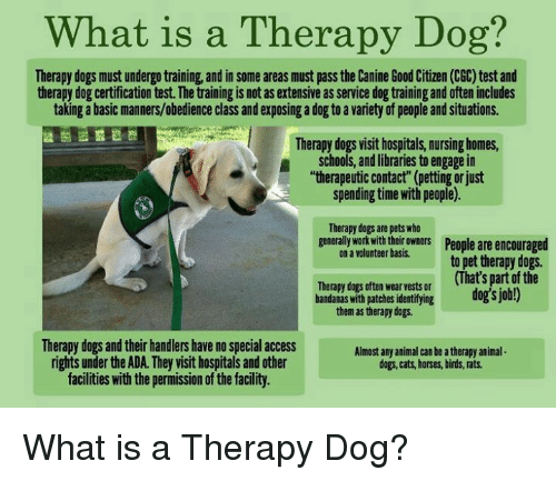 what is a therapy dog? therapy dogs mustundergotraining and in some ...