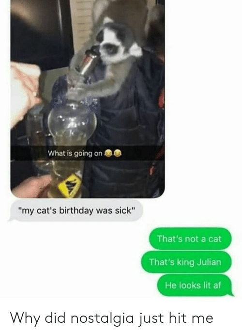 """Af, Birthday, and Cats: What is going on  """"my cat's birthday was sick""""  That's not a cat  That's king Julian  He looks lit af Why did nostalgia just hit me"""