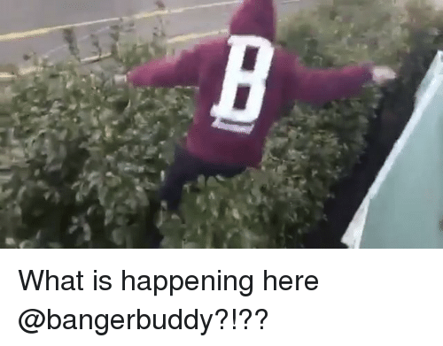 Memes, 🤖, and What Is Happening: What is happening here @bangerbuddy?!??