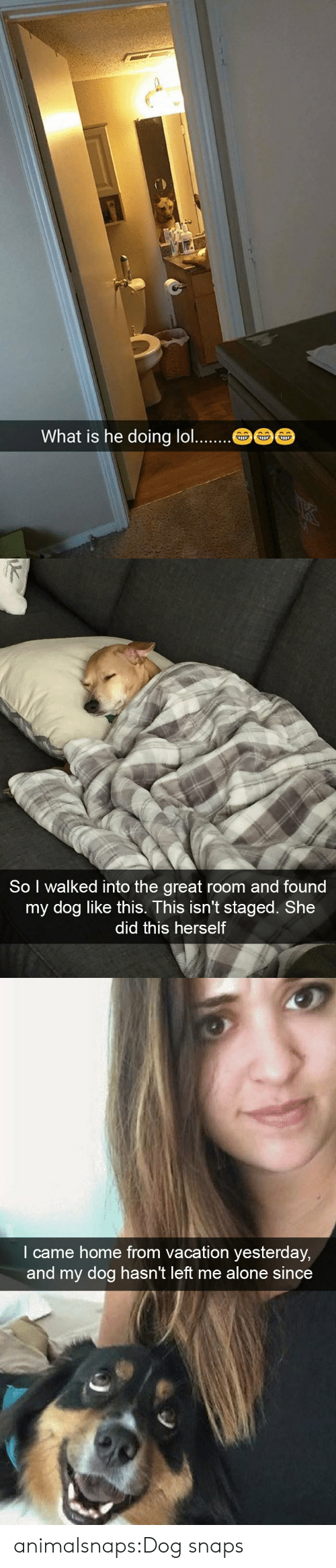 Being Alone, Target, and Tumblr: What is he doing lo..   So I walked into the great room and found  my dog like this. This isn't staged. She  did this herself   l came home from vacation yesterday  and my dog hasn't left me alone since animalsnaps:Dog snaps