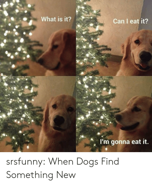 Dogs, Tumblr, and Blog: What is it?  Can I eat it?  I'm gonna eat it. srsfunny:  When Dogs Find Something New