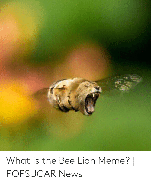 What Is the Bee Lion Meme? | POPSUGAR News | Meme on ME ME