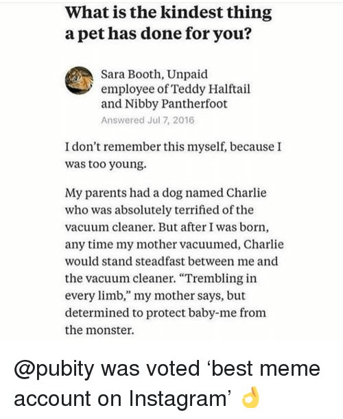 """Charlie, Instagram, and Meme: What is the kindest thing  a pet has done for you?  Sara Booth, Unpaid  employee of Teddy Halftail  and Nibby Pantherfoot  Answered Jul 7, 2016  I don't remember this myself, because I  was too young.  My parents had a dog named Charlie  who was absolutely terrified of the  vacuum cleaner. But after I was born,  any time my mother vacuumed, Charlie  would stand steadfast between me and  the vacuum cleaner. """"Trembling in  every limb,"""" my mother says, but  determined to protect baby-me from  the monster. @pubity was voted 'best meme account on Instagram' 👌"""