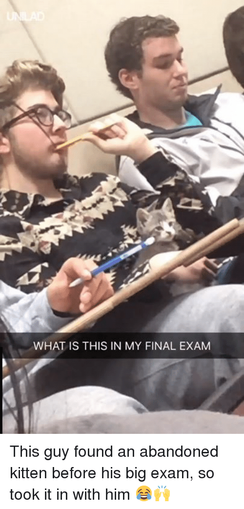 Dank, What Is, and 🤖: WHAT IS THIS IN MY FINAL EXAM This guy found an abandoned kitten before his big exam, so took it in with him 😂🙌