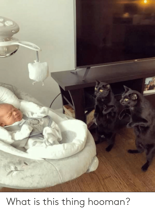 What Is, Thing, and What: What is this thing hooman?