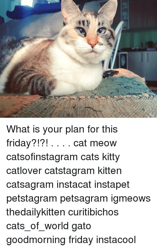 Memes, 🤖, and Cat: What is your plan for this friday?!?! . . . . cat meow catsofinstagram cats kitty catlover catstagram kitten catsagram instacat instapet petstagram petsagram igmeows thedailykitten curitibichos cats_of_world gato goodmorning friday instacool