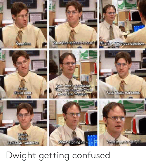 Confused, The Office, and Bear: What kind of bear is best? That's a dievlous question  Question  False  Black bea  Wel that's debatable  There  are basicalytwe  Fact bears eat beets  SChHOOors of thought  Bears  Beets  Battlestar Galactica  hatis going on  What are yowooing Dwight getting confused