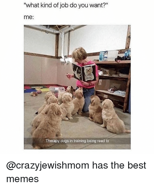 "Dogs, Funny, and Memes: ""what kind of job do you want?""  me:  COOD  DOG  Therapy dogs in training being read to @crazyjewishmom has the best memes"