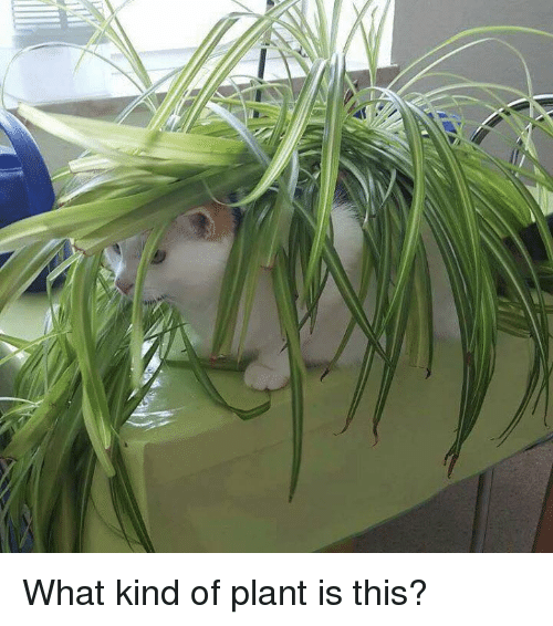 Memes And What Kind Of Plant Is This