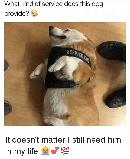 Life, Memes, and 🤖: What kind of service does this dog  provide?  SERVICE It doesn't matter I still need him in my life 😭💕💯