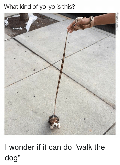 """Funny, Yo, and Wonder: What kind of yo-yo is this? I wonder if it can do """"walk the dog"""""""