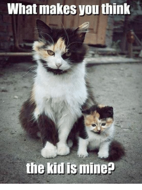 what makes you think the kid is mine mine meme on