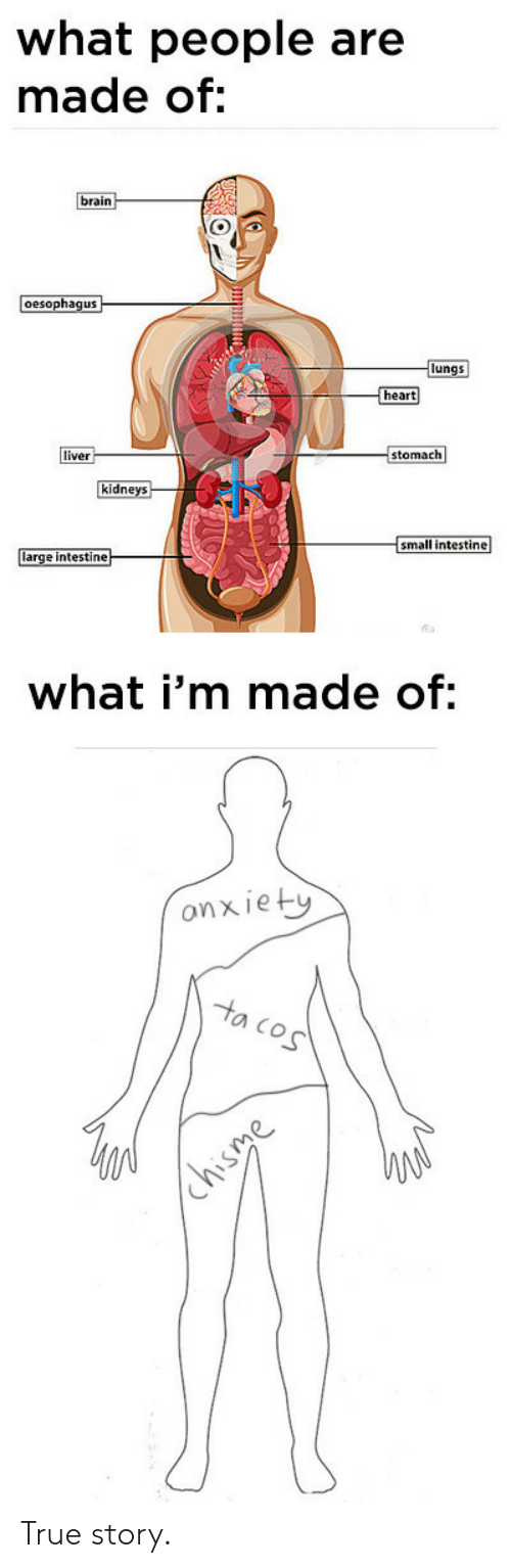 True, Brain, and Heart: what people are  made of:  brain  oesophaqus  lungs  heart  liver  stomach  idne  small intestine  e intestine  what i'm made of:  onxiet  O Co True story.