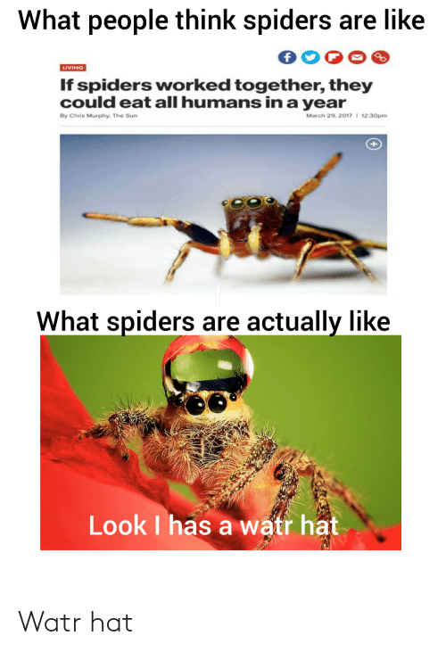 Spiders, Living, and Sun: What people think spiders are like  LIVING  If spiders worked together, they  could eat all humans in a year  March 29, 2017 I 12:30pm  By Chris Murphy. The Sun  What spiders are actually like  Look I has a watr hat Watr hat