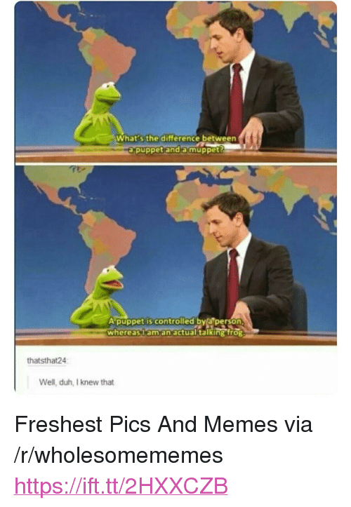 """Memes, Muppet, and Via: What s the difference between  axpuppetanda muppet?  Apuppet is controlled bya person,  whereasaman actual talking froR  thatsthat24  Well, duh, I knew that <p>Freshest Pics And Memes via /r/wholesomememes <a href=""""https://ift.tt/2HXXCZB"""">https://ift.tt/2HXXCZB</a></p>"""