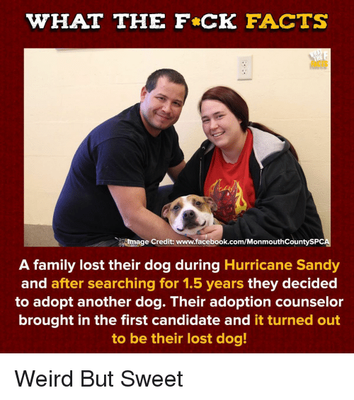 Facebook, Facts, and Family: WHAT THE F CK FACTS  FACTS  tmage Credit: www.facebook.com/MonmouthCountySPC  A family lost their dog during Hurricane Sandy  and after searching for 1.5 years they decided  to adopt another dog. Their adoption counselor  brought in the first candidate and it turned out  to be their lost dog! Weird But Sweet