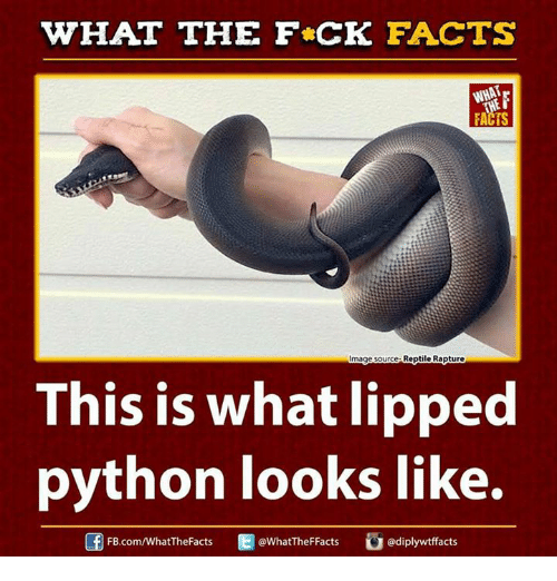 Dank, 🤖, and Python: WHAT THE FCK FACTS  FACTS  Reptile Rapture  mage Source  This is what lipped  python looks like.  FB.com/WhatTheFacts  @WhatTheFFacts  adiplywtffacts